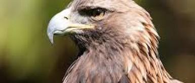 """ايداع طائر """"عقاب الأفاعي"""" بحديقة الحيوانات الوطنية في قلقيلية"""