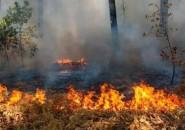 حريق يلتهم 40 شجرة زيتون في جنين
