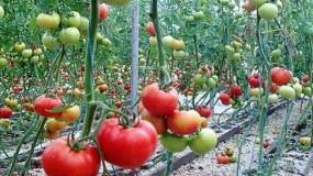 """دولة الاحتلال تهدد بوقف استيراد المنتجات الزراعية الفلسطينية رداً على قرار """"العجول"""""""