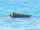 """سفينة """"ساتيا"""" الباكستانية الغارقة في بحر غزّة"""