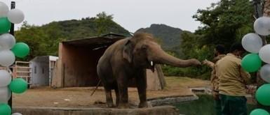 """الفيل """"كافان"""" يغادر باكستان"""