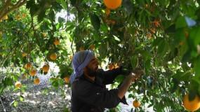 خلال 2020.. صادرات مصر الزراعية تتخطى حاجز الـ5 ملايين طن