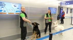 دراسة: الكلاب تكشف كورونا من شم عينات بول المصابين